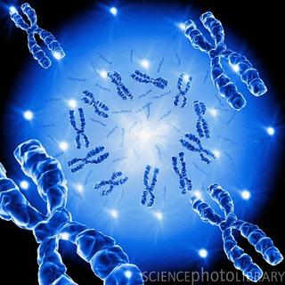 Autismo, genetica y factores ambientales